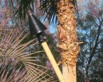 Automated Remote Control Black Cone Head Tiki with Bamboo Pole